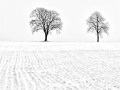 Original_3)-Wolfgang-Krapp-Winter