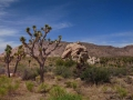 G1-8) Joshua Tree Nationalpark
